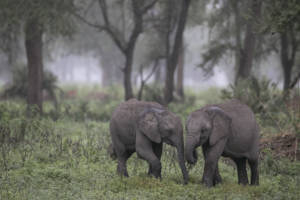 Gorongosa Reborn: A Cameraman's Journal