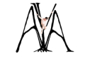AYA: An Aerial Ballet in Three Acts Tickets - Chicago