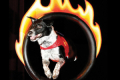 Chris Perondi's Stunt Dog Experience Tickets - Los Angeles