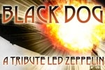 Black Dog: A Tribute to Led Zeppelin