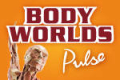 Body Worlds: Pulse Tickets - New York City