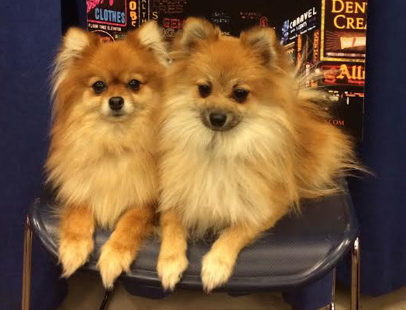 <p>And who can forget about the production&#39&#x3B;s furry little doggies, trained by the one and only Tony Award-winning animal trainer, Bill Berloni?</p><br />(© Seth Walters)
