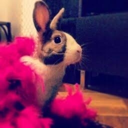 <p>Max the bunny is boa-ready for his stage debut as Janis Joplin. </p>