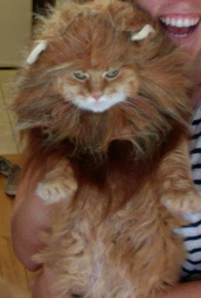 <p>With his mane of golden hair, Linney is looking princely as Simba in <em>The Lion King</em>.</p>