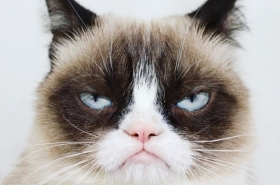 Grumpy Cat Receives an Invitation to Broadway's Jellicle Ball in Cats