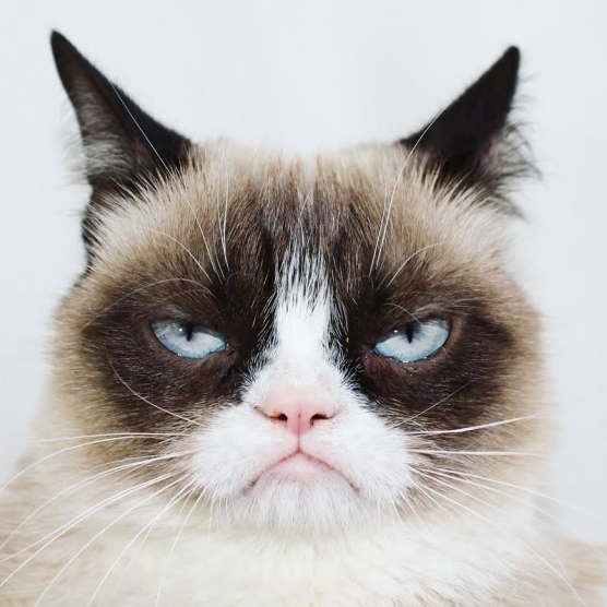 Grumpy Cat Receives an Invitation to Broadway's Jellicle Ball in <em>Cats</em>
