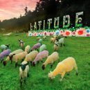 Seven things to see at Latitude this weekend