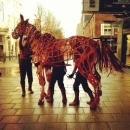War Horse author in Remembrance Sunday tribute