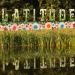 Our highlights from this year's Latitude Festival